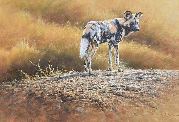 Painting - Cape Hunting Dog by Alan M Hunt