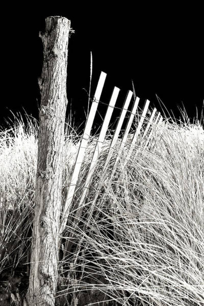 Photograph - Cape May Dune Fence 2008 by John Rizzuto