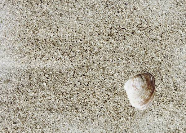Photograph - Cape May Sand And Shell by JAMART Photography