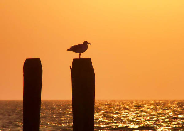 Photograph - Seagull Perch Silhouette by JAMART Photography