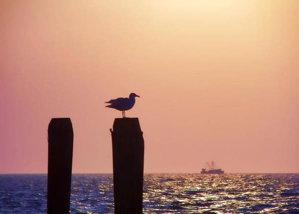 Photograph - Seagull Perch View by JAMART Photography