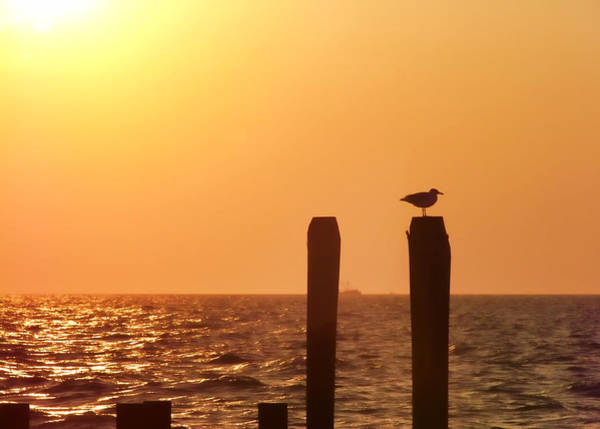 Photograph - Gull Perches by JAMART Photography