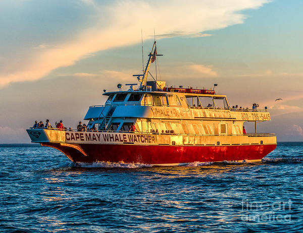Photograph - Cape May Whale Watcher by Nick Zelinsky