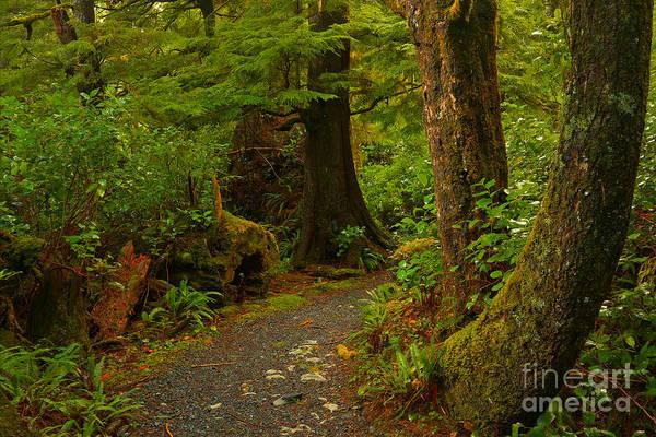 Photograph - Cape Scott Rainforest Trail by Adam Jewell