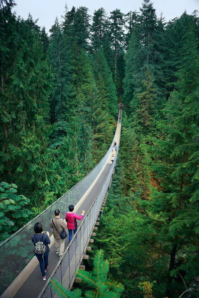Photograph - Capilano Suspension Bridge by Songquan Deng