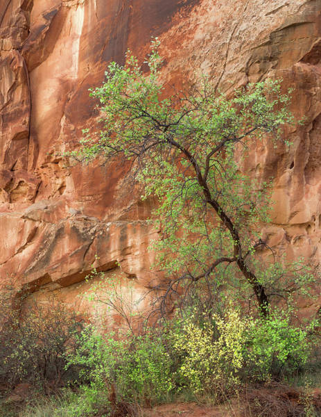Wall Art - Photograph - Capitol Gorge by Joseph Smith
