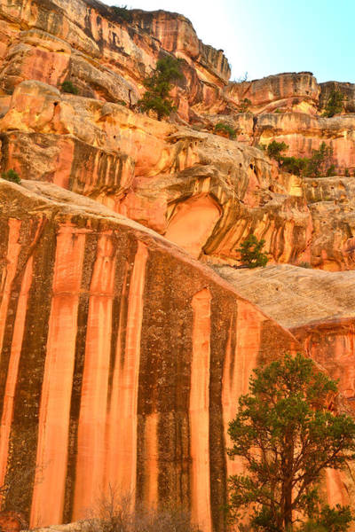 Photograph - Capitol Gorge Varnish by Ray Mathis