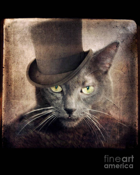 Cat In The Hat Wall Art - Photograph - Captain Grey by Lisa Howarth