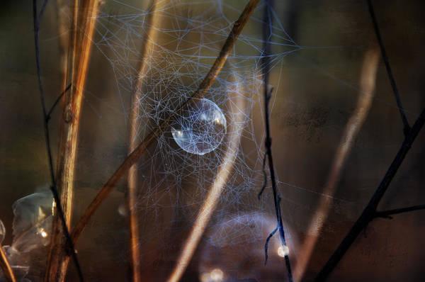 Photograph - Captured Fairy by Christina VanGinkel