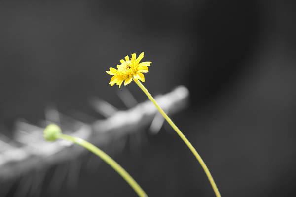 Photograph - Captured Sunshine by Colleen Cornelius