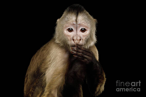 Photograph - Capuchin Said The Wrong Thing by Sergey Taran
