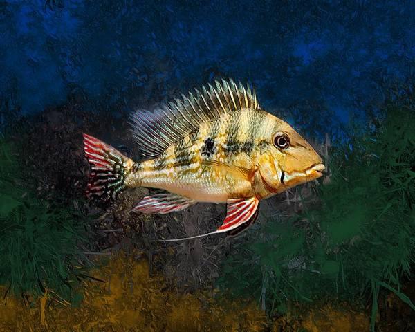 Panama Digital Art - Caquetaia Kraussii Cichlid  by Scott Wallace Digital Designs