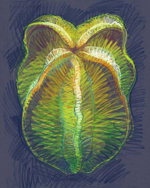 Drawing - Carambola by Judith Kunzle