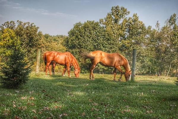 1006 - Caramel Horses I Art Print