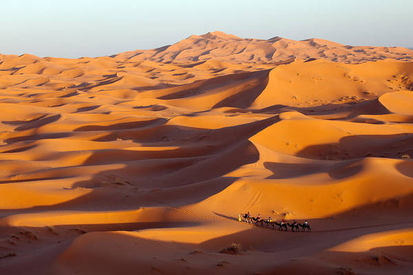 Photograph - Caravan In Desert by Aivar Mikko