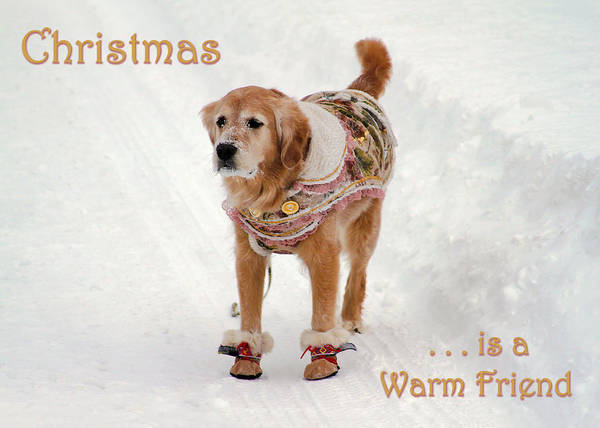Photograph - Card Christmas Is A Warm Friend by Bonnie Follett