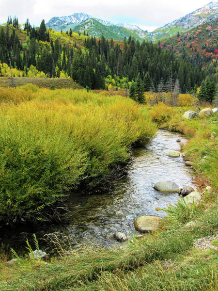 Kings Canyon Photograph - Cardiff Fork Autumn by David King