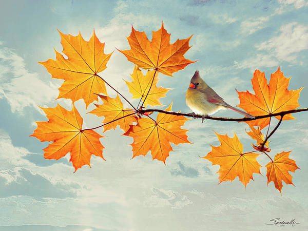 Wall Art - Digital Art - Cardinal And Autumn Leaves by M Spadecaller