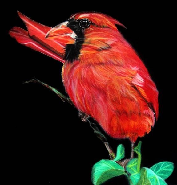 Red Cardinal Drawing - Cardinal by Ann Supan