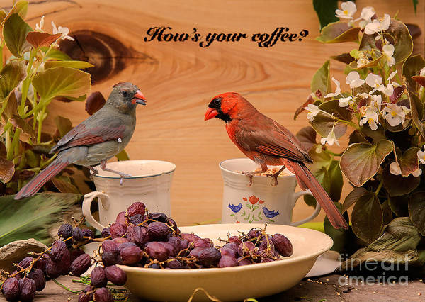 Photograph - Cardinal Coffee by James Hennis