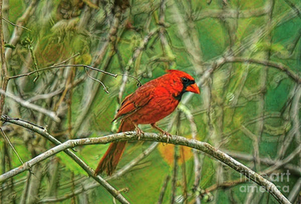 Wall Art - Photograph - Cardinal Delight by Deborah Benoit