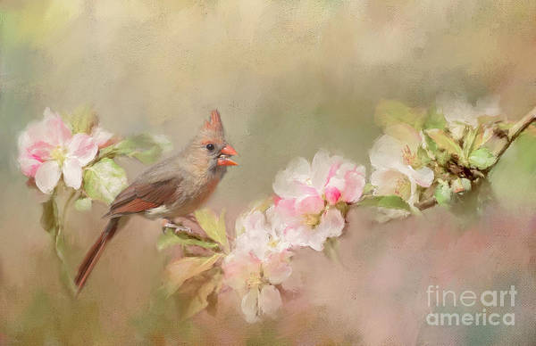 Photograph - Cardinal Delight by Pam  Holdsworth
