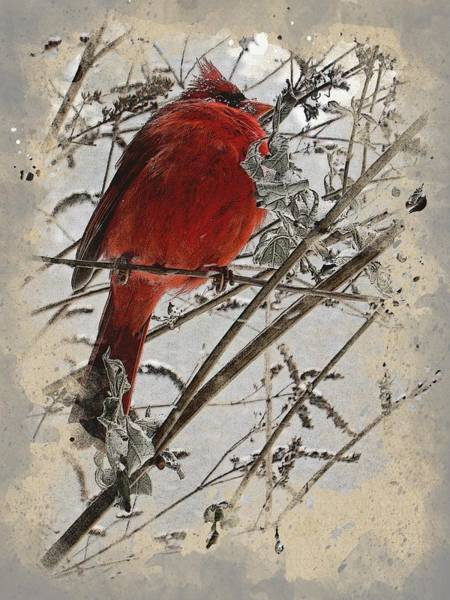 Digital Art - Cardinal by Gina Harrison