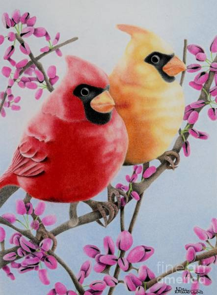 Beautiful Park Drawing - Cardinal Love  by Sharon Patterson