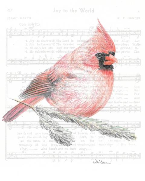 Red Cardinal Drawing - Cardinal On Joy To The World by Kathy Weidner