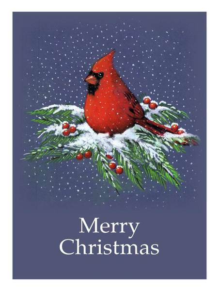 Wall Art - Drawing - Cardinal On Snowy Pine Branches, Merry Christmas by Joyce Geleynse