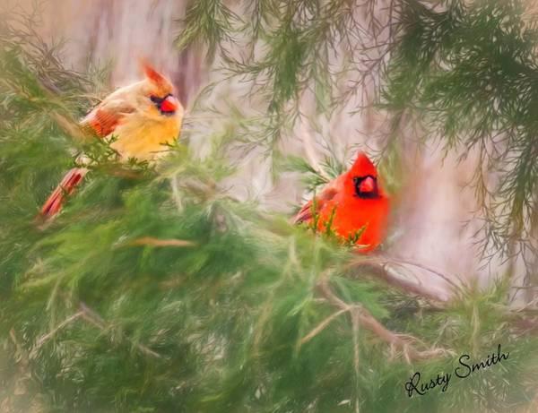 Digital Art - Cardinal Pair In Spruce Tree by Rusty R Smith