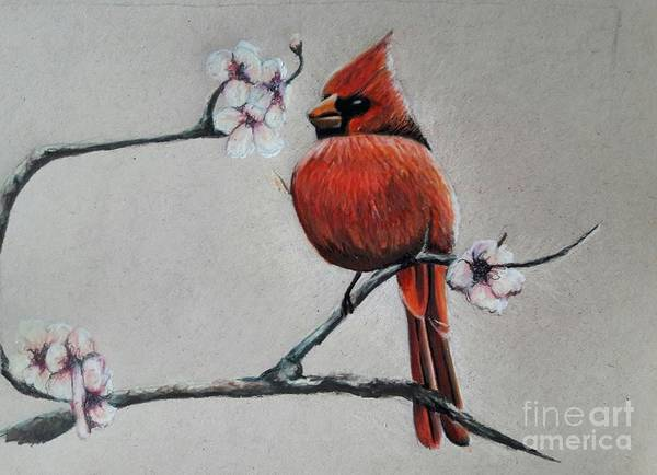 Red Cardinal Drawing - Cardinal Pink Flowers by Christina Little