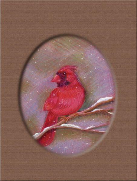 Red Cardinal Drawing - Cardinale Rosso by Susan LaCanne