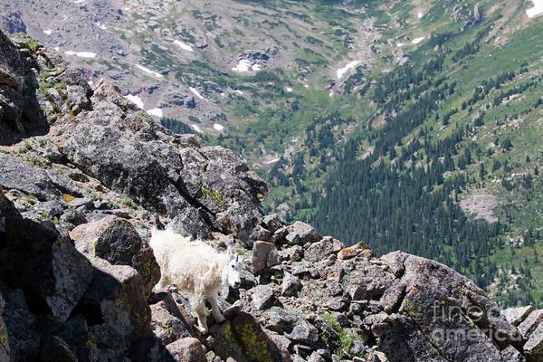 Photograph - Careful Goat On The Mount Massive Summit by Steve Krull