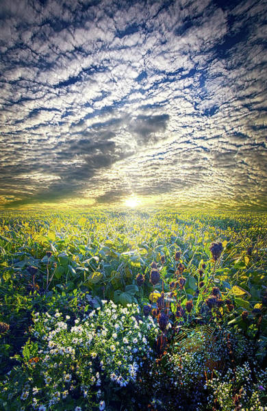 Wall Art - Photograph - Cares Away by Phil Koch