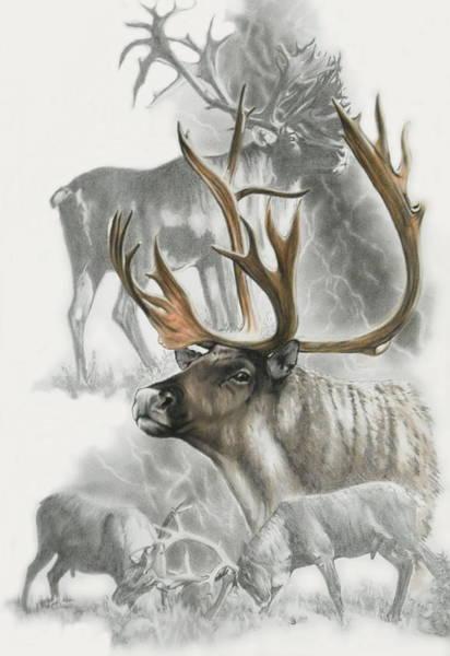Mixed Media - Caribou by Barbara Keith