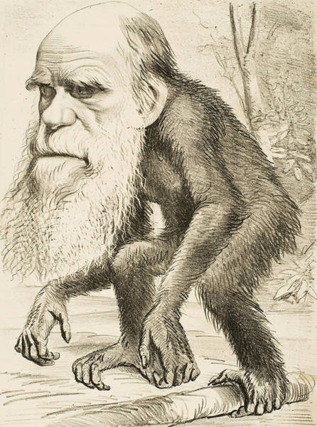 Elderly Painting - Caricature Of Charles Darwin by English School