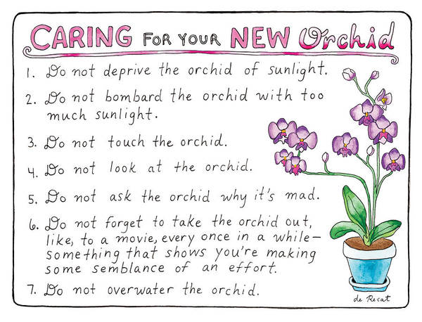 Care Drawing - Caring For Your New Orchid by Olivia de Recat
