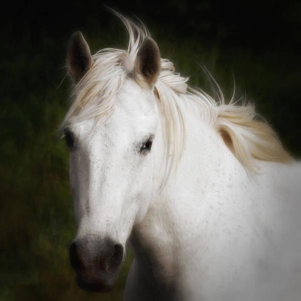 Photograph - Carmargue Horse by Gigi Ebert