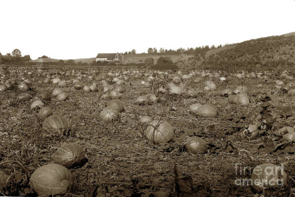 Photograph - Carmel Mission Pumpkins Fields Circa 1890 by California Views Archives Mr Pat Hathaway Archives