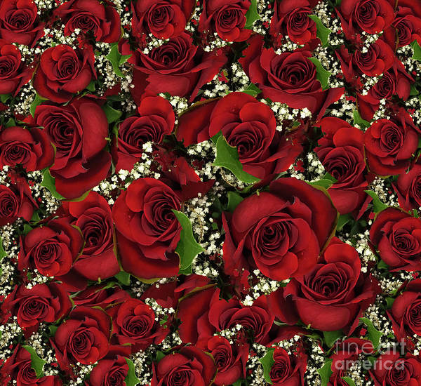 Photograph - Carmine Roses by Rockin Docks Deluxephotos