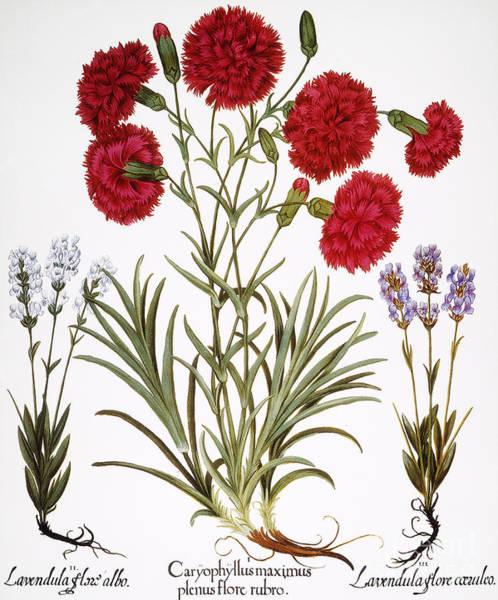 Wall Art - Photograph - Carnation & Lavender, 1613 by Granger