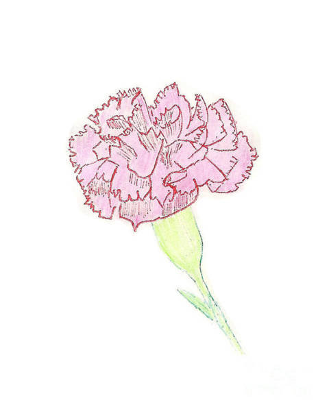 Painting - Carnation by Donna L Munro