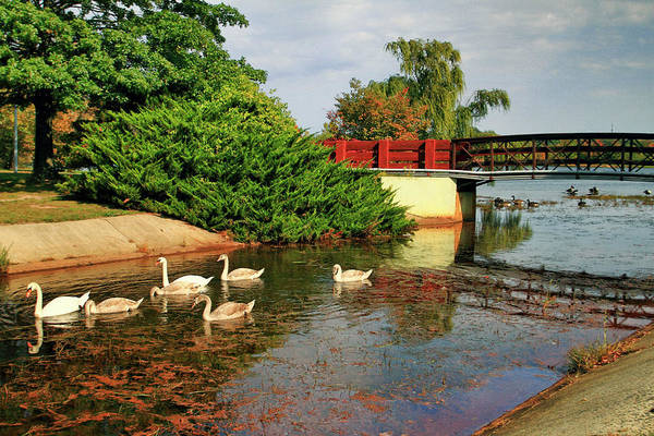Wall Art - Photograph - Sayreville Nj Bridge And Swan Family by Geraldine Scull