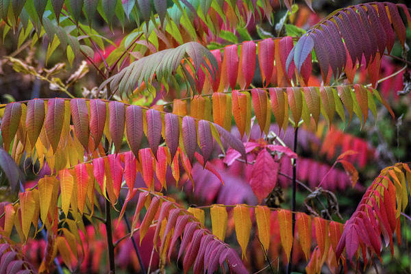 Wall Art - Photograph - Carnival Of Autumn Color by Bill Pevlor