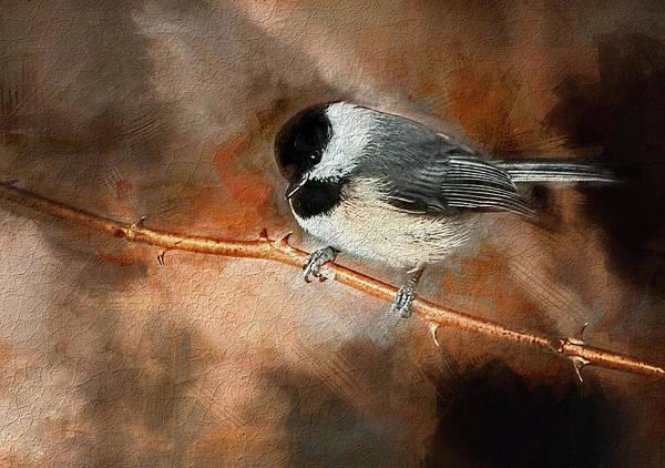 Photograph - Carolina Chickadee by Reynaldo Williams
