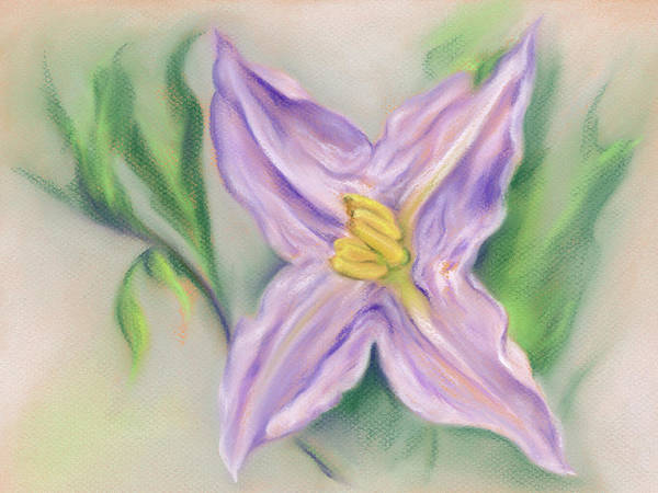 Pastel - Carolina Nightshade by MM Anderson