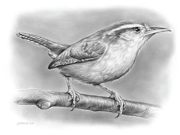 Wall Art - Drawing - Carolina Wren by Greg Joens