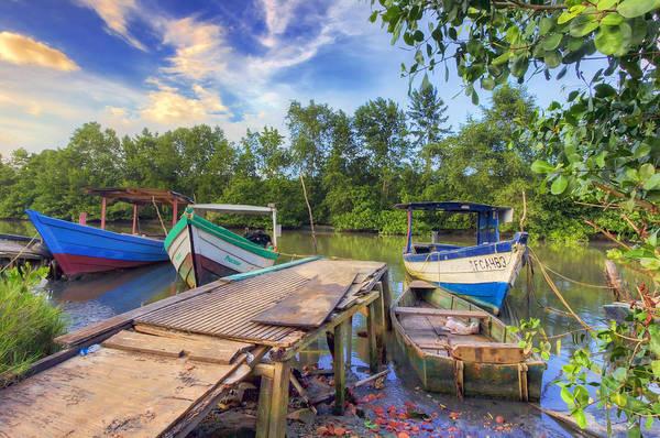 Mangroves Digital Art - Caroni Swamp by Nadia Sanowar