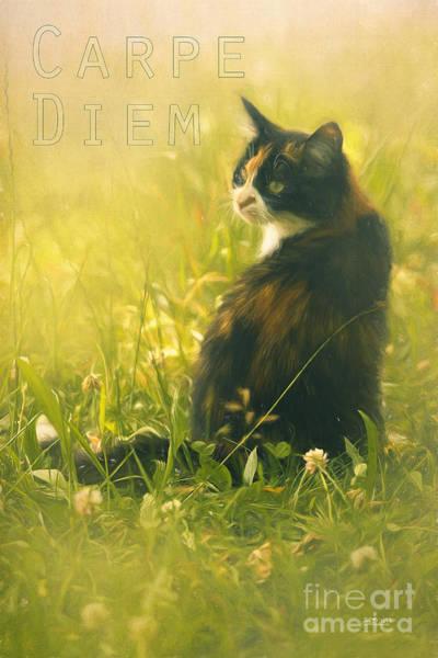 Photograph - Carpe Diem by Jutta Maria Pusl